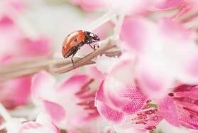 Леди в розовом