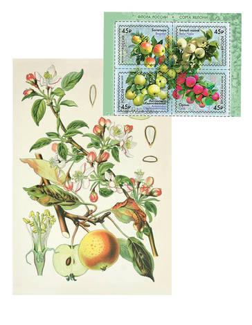 Набор «Яблочный» (открытка+марка)