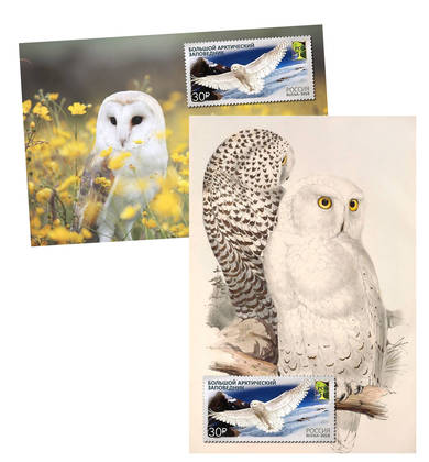 Набор «Cовы» (открытки+марки)
